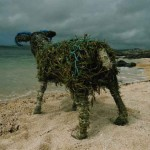 'Ram at the beach'  2005