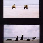 'Dogs at the beach' 2002