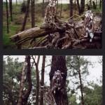 'Birds in a wood' 2003
