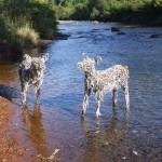 Deer in the Gihon river, Vermont 2009