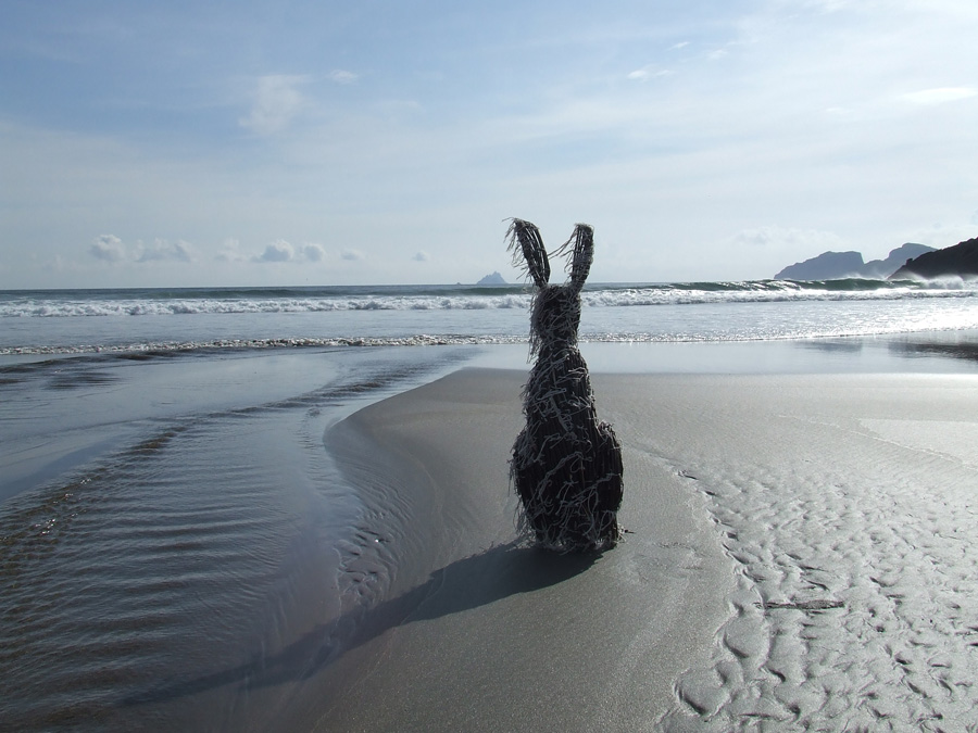 Hare at st finnians bay