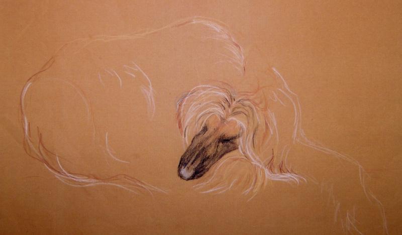 Afghan hound, pastel