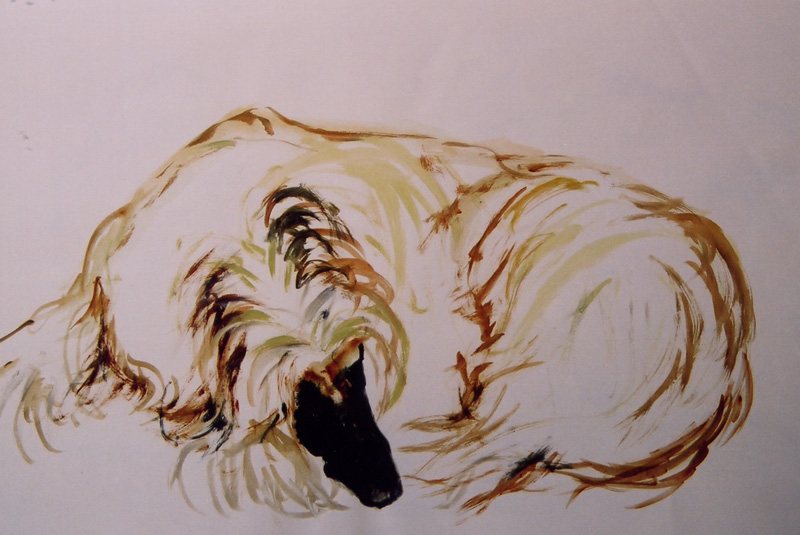 Afghan hound, paint
