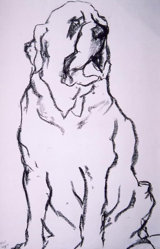 Saint Bernard, charcoal sketch