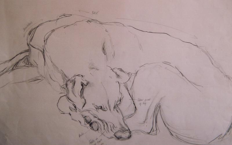Great Dane sketch, pencil