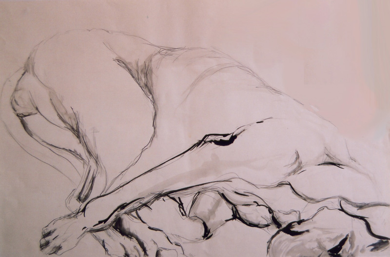 Great Dane sketch, pencil and ink