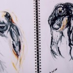 Afghan hound notebook sketches