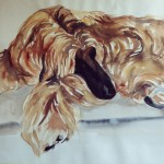 Afghan hound, watercolour