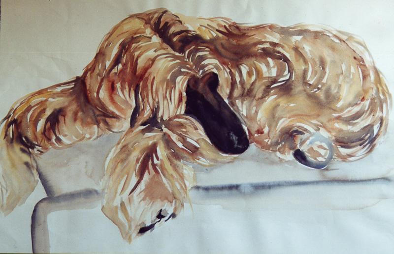 Afghan hound, watercolour